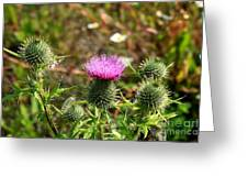 Spear Thistle Greeting Card