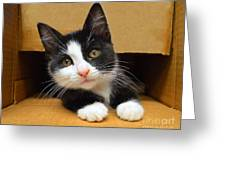 Special Delivery Tuxedo Kitten Greeting Card