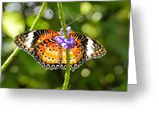 Speckled Butterfly Greeting Card