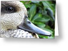 Speckled Duck Greeting Card