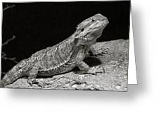 Speckled Iguana Lizard Greeting Card