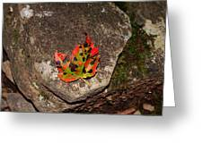 Speckled Leaf Greeting Card