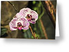 Speckled Orchids Greeting Card