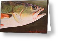 Speckled Trout Greeting Card by Amanda Ladner