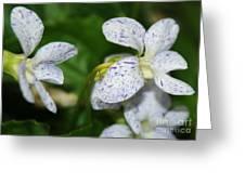Speckled Wilflower Greeting Card