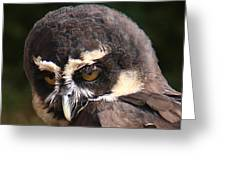 Spectacled Owl Portrait 2 Greeting Card