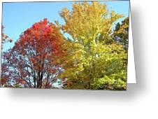 Spectacular Autumn Colors Greeting Card