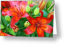 Spectacular Day Lilies Greeting Card
