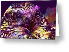 Sperber Raptor Plumage Bird Of Prey  Greeting Card