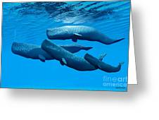 Sperm Whale Family Greeting Card