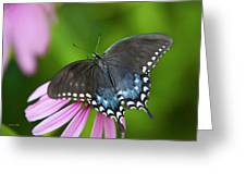 Spice Of Life Butterfly Greeting Card