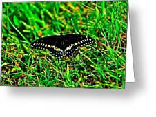 Spicebush Swallow Tail Greeting Card