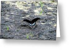 Spicebush Swallowtail 2 Greeting Card