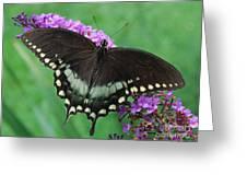 Spicebush Swallowtail Greeting Card