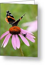 Spider And Butterfly On Cone Flower Greeting Card