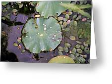 Spider And Lillypad Greeting Card