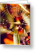 Spider And Spider Web Greeting Card