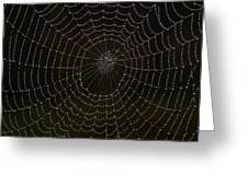 Spider Cobweb  Greeting Card