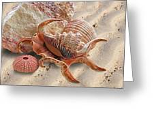 Spider Conch Shell On The Beach Greeting Card