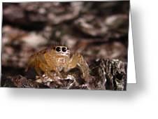 Spider Eyes Greeting Card