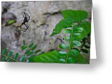 Spider In Thin Air Greeting Card
