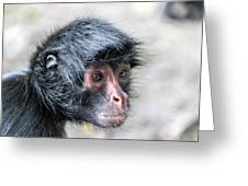 Spider Monkey Face Closeup Greeting Card