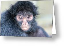 Spider Monkey Face Greeting Card