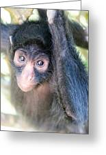 Spider Monkey Vertical View Greeting Card