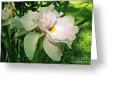 Spider On Iris Greeting Card