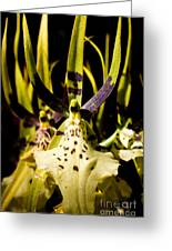 Spider Orchid Greeting Card
