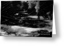 Spider Web Black White Greeting Card