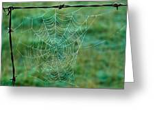 Spider Web In The Springtime Greeting Card