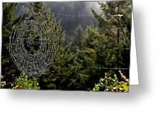 Spider Web Overlook Greeting Card