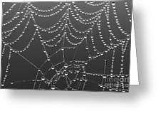 Spider Web Patterns Greeting Card