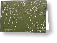 Spider Web With Water Droplets  Greeting Card