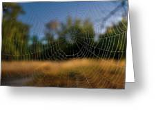 Spiderpane Window Greeting Card