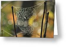 Spider's Creation Greeting Card
