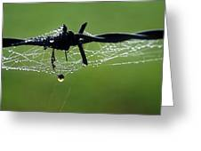 Spiderweb On Fencing Greeting Card