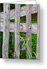 Spiderworts By The Gate Greeting Card