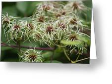 Spidery Flowers Greeting Card