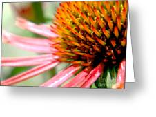Spike On The Flower Greeting Card