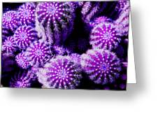 Spiky Bunch 1.1 Greeting Card