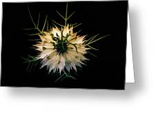 Spiky On Black Greeting Card