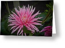 Spiky Pink Greeting Card