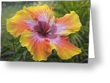 Spin The Bottle Hibiscus Greeting Card