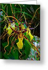 Spindly Orchid Greeting Card