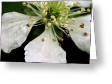Spindly Stamen Greeting Card