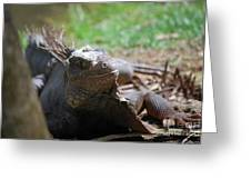 Spines Along The Back Of An Iguana In The Tropics Greeting Card