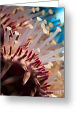 Spines Of A Crown Of Thorns Starfish Greeting Card