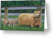Sping Lambs Greeting Card